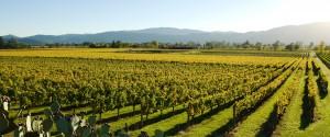 Napa and Sonoma biking trips with Trek Travel