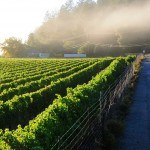 california-wine-explorer-01-1600x670