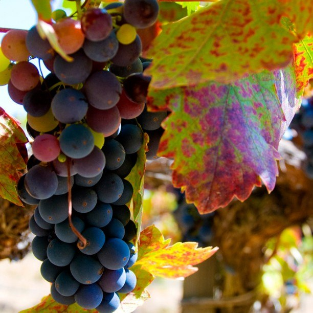 View full trip details for California Wine Country