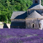 Lavender fields on Trek Travel's Provence luxury bike tours.