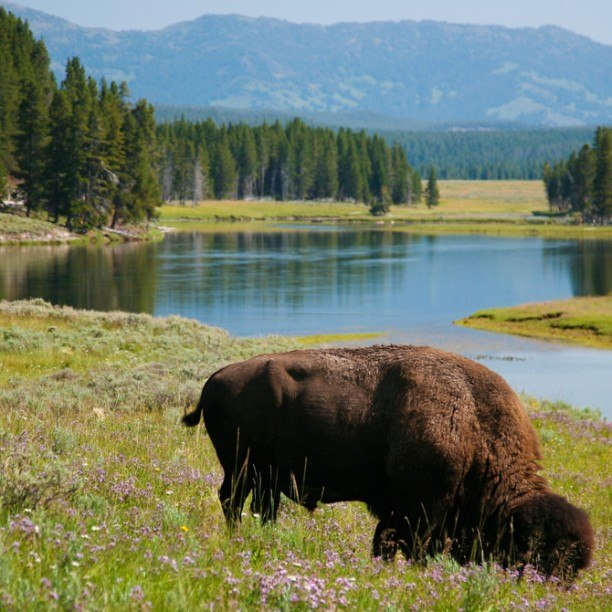 View full trip details for Yellowstone Family Custom