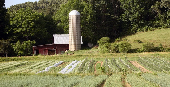 Cruise by beautiful farms on a Trek Travel bike tour from Asheville to Highlands