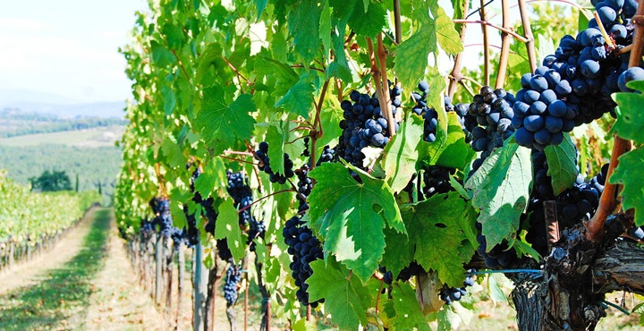 Enjoy the local wines of Piedmont on a Trek Travel bike tour in Italy