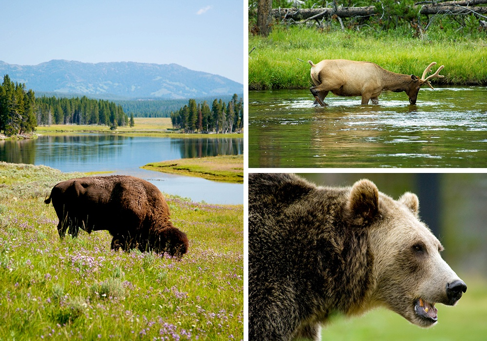 See wildlife on Trek Travel's Yellowstone and Grand Tetons National Park Bike Tour in Wyoming