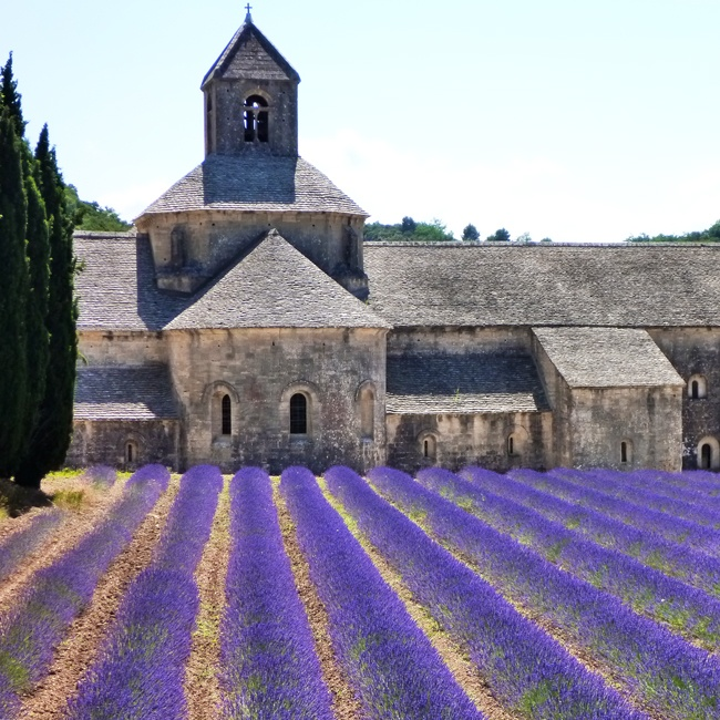 Ride past aromatic lavender in Provence, France