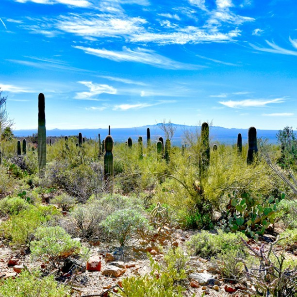 View full trip details for Tucson Ride Camp 4 Day