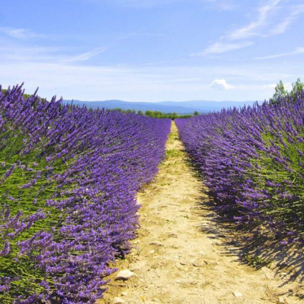 View full trip details for Provence Luxury