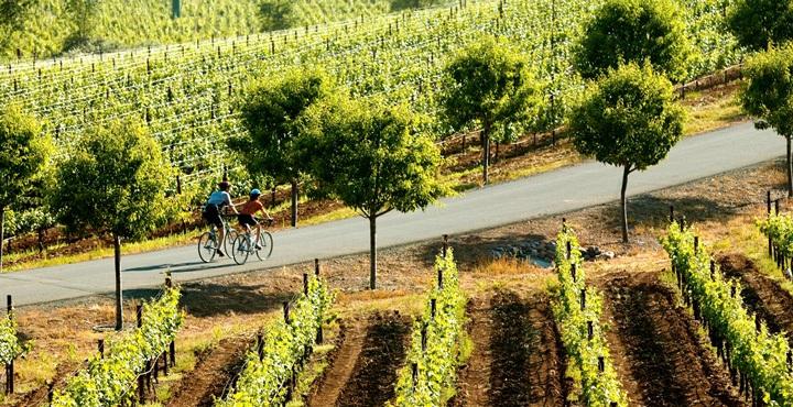 Ride through the vineyards of California Wine Country on Trek Travel's California Wine long weekend bike tour